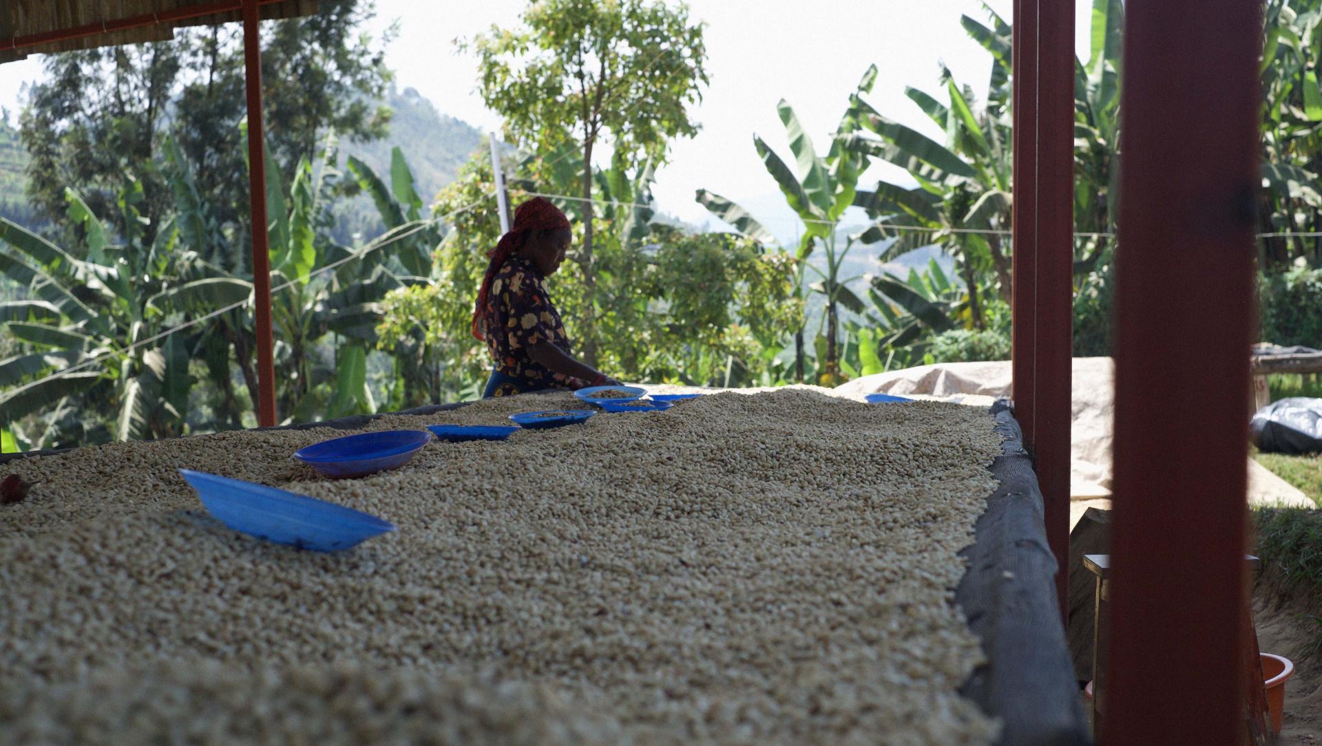 10 Věc 237 Kter 233 Stoj 237 Za To Vědět O K 225 Vě Ze Rwandy Nordbeans